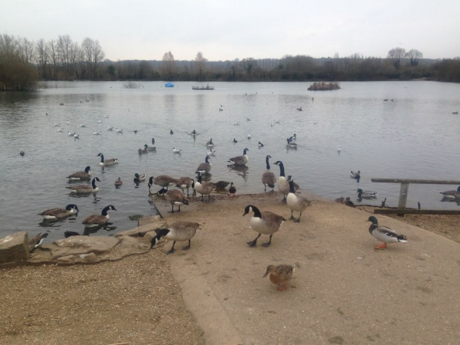 nature discovery centre thatcham
