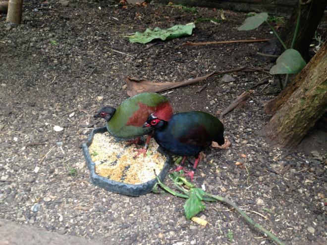 the living rainforest birds-w1000-h1000