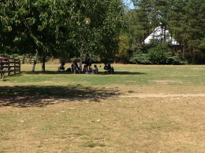 millets, picnic, free