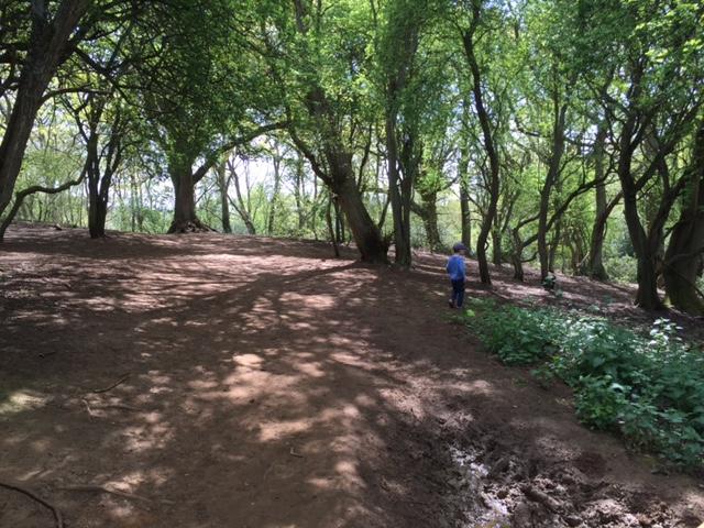 shotover, woods, walks, trail, kids