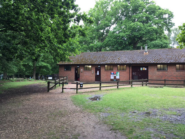 camping new forest, new forest camping, hollands wood new forest, best campsites new forest
