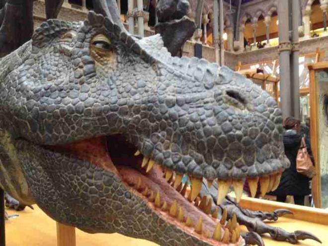 dinosaur, museum, oxford, kids