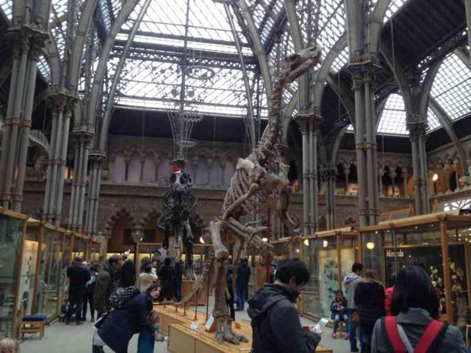 dinosaur, skeleton, natural history musum, oxford