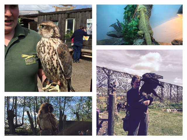 millets falconry multi image