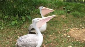 birdland 13