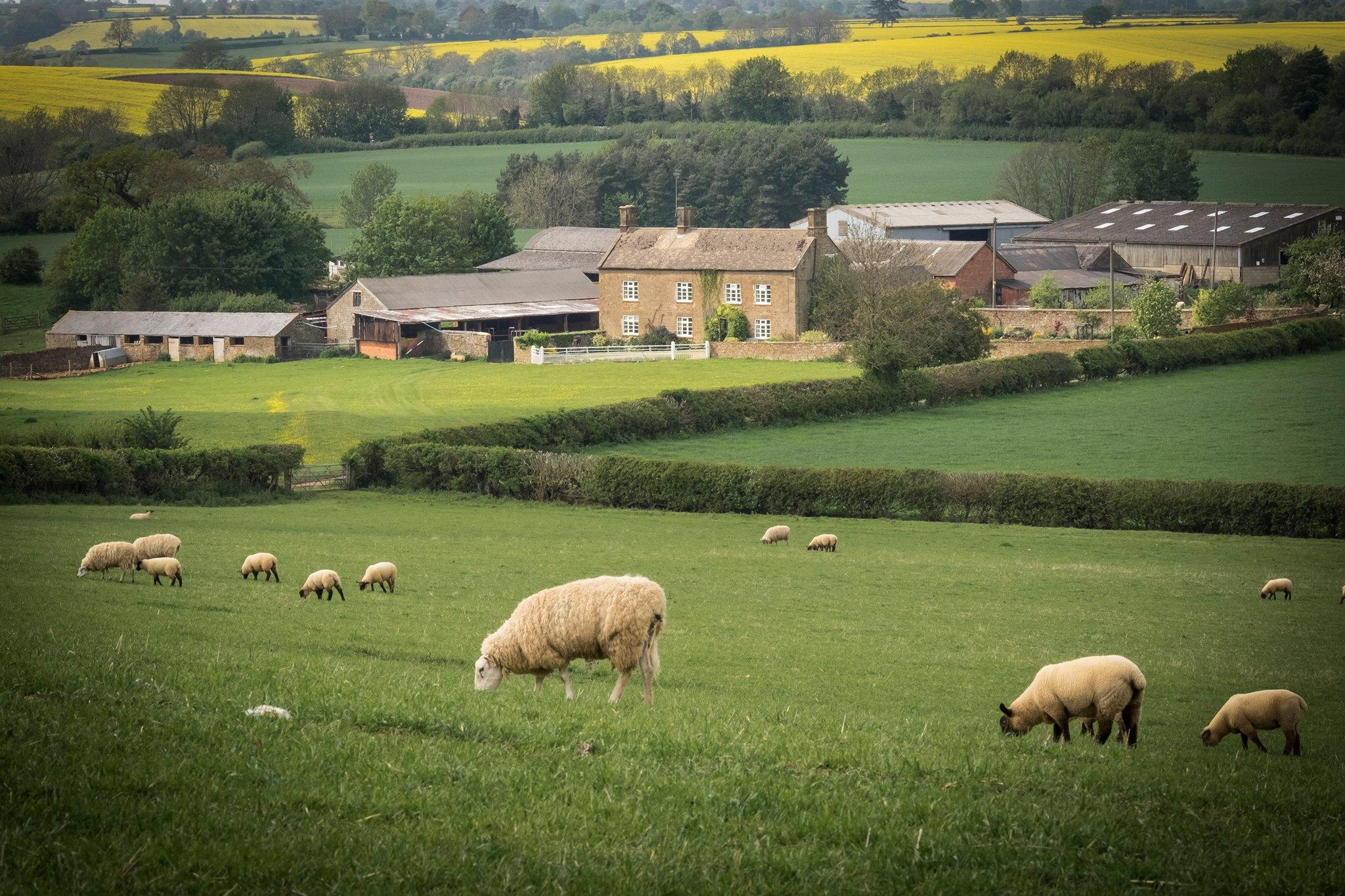 banbury lambing, broughton grounds farm lambing, lambing oxfordshire