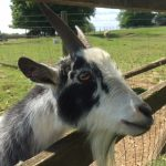 cotswold farm park review, best farm park oxfordshire, best farm park gloucestershire, best family day out