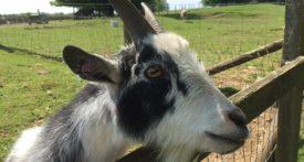 cotswold farm park review, best farm park oxfordshire, best farm park gloucestershire, best family day out